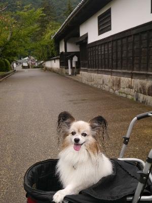 広島11−2