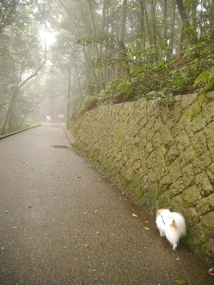 広島11−11