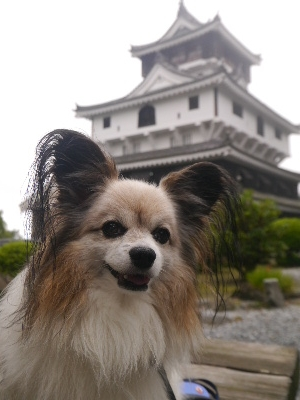 広島11−13