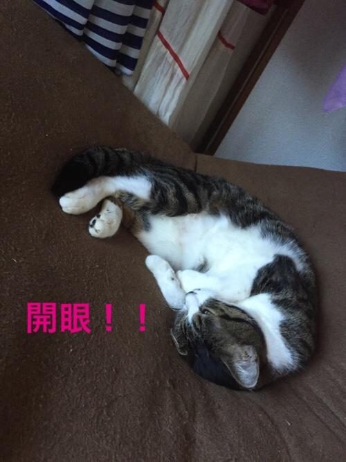 fc2blog_20150822164837a2a.jpg