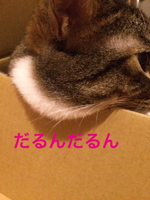 fc2blog_201509031526052d0.jpg