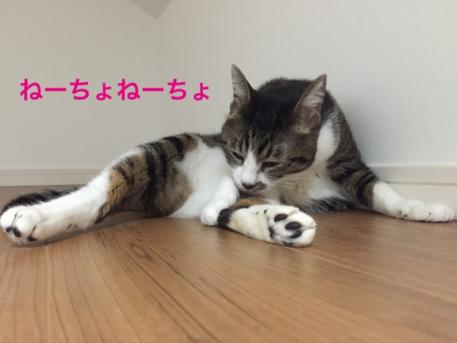 fc2blog_20151022133647caa.jpg