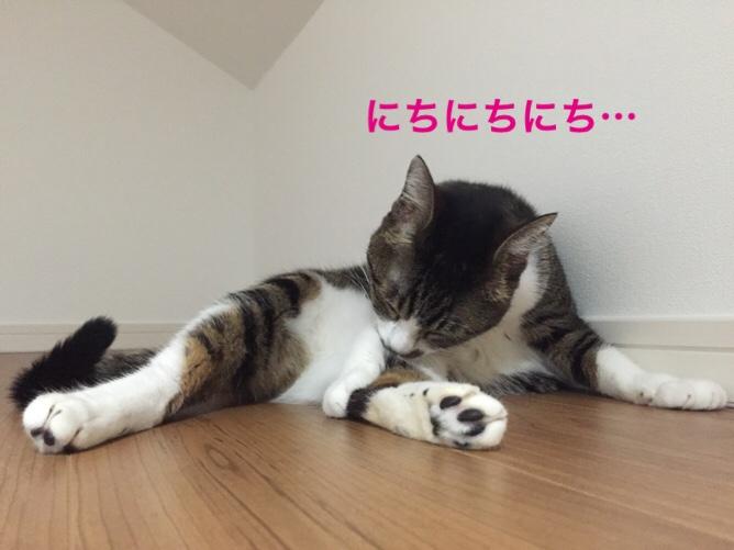 fc2blog_201510221337246ca.jpg