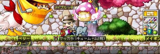 Maple13172a.jpg
