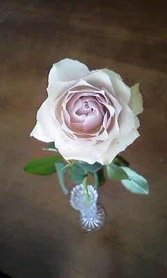 rose201508cafe.jpg