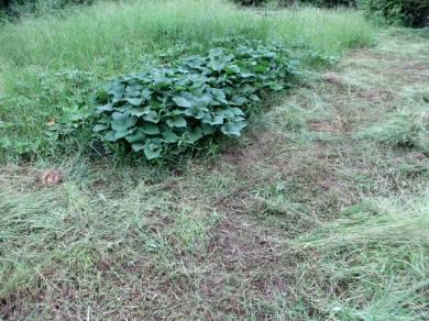 2015_08 20_また草刈り、耕運・3