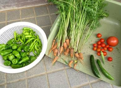 2015_08 06_ささやかな収穫・2