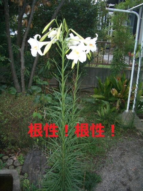CIMG4979.jpg