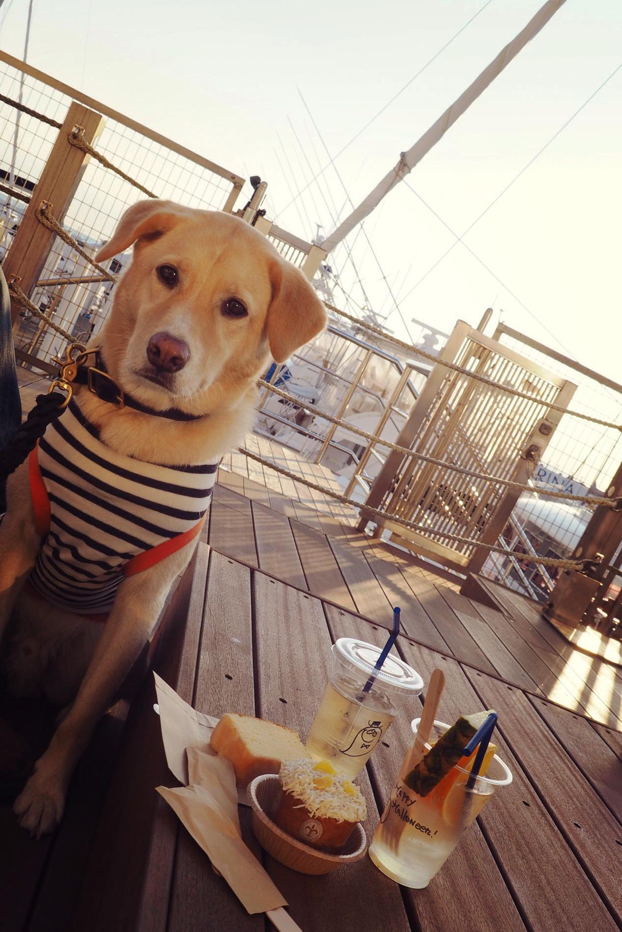 ロンハーマンカフェ逗子 わんこ 犬