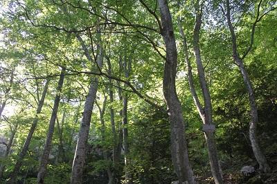 木々のささやき