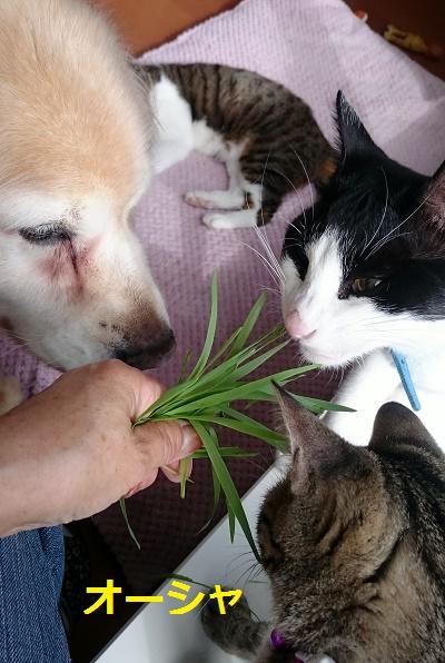 マリアとオーシャゲン猫草