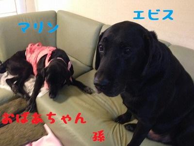 20150905_23.jpg