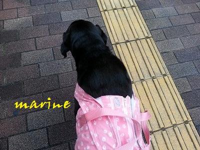20150917marine2.jpg