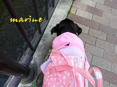 20151013marine1.jpg