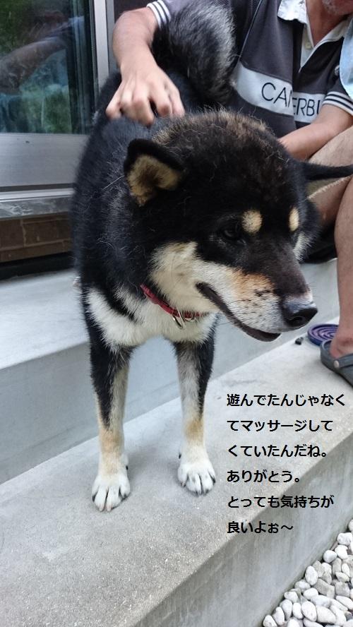 まるちゃん2015082603