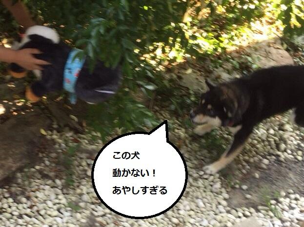 まるちゃん2015082702