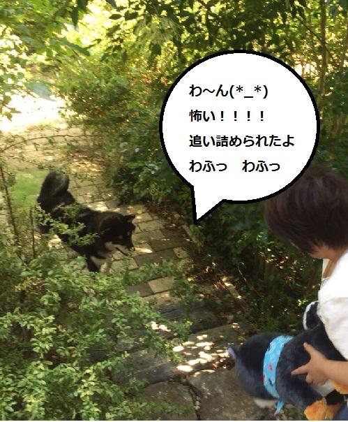 まるちゃん2015082704