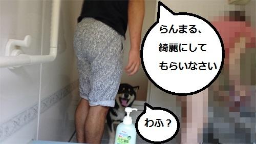 まるちゃん2015082901
