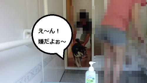 まるちゃん2015082902