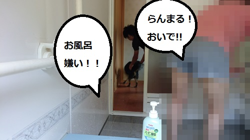 まるちゃん2015082903
