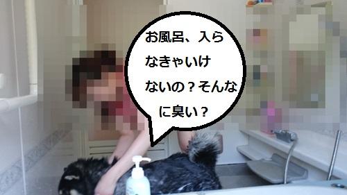 まるちゃん2015082904