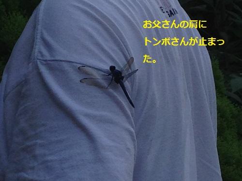 まるちゃん2015083004