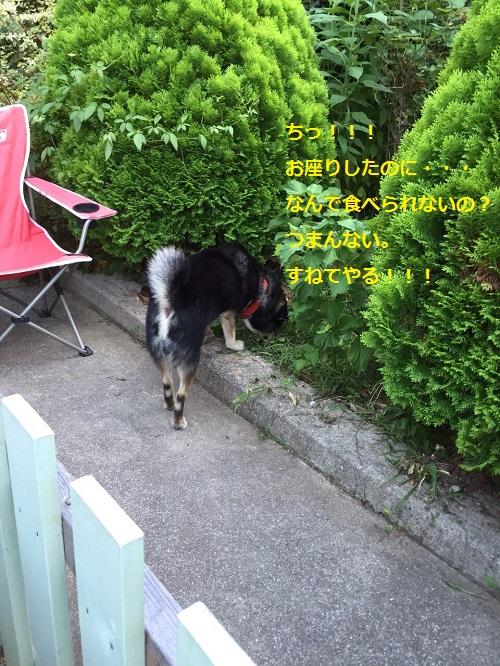 まるちゃん2015083007