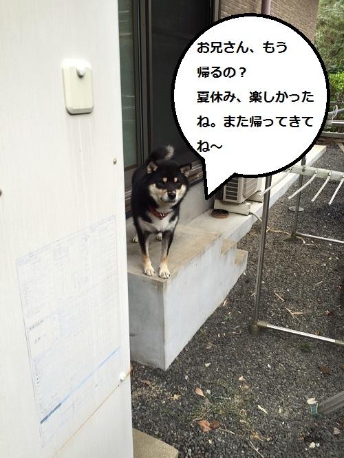 まるちゃん2015092401