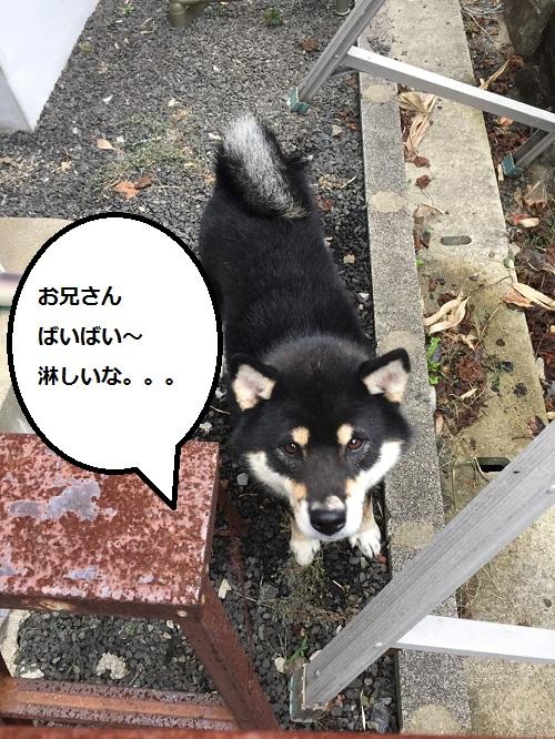 まるちゃん2015092402