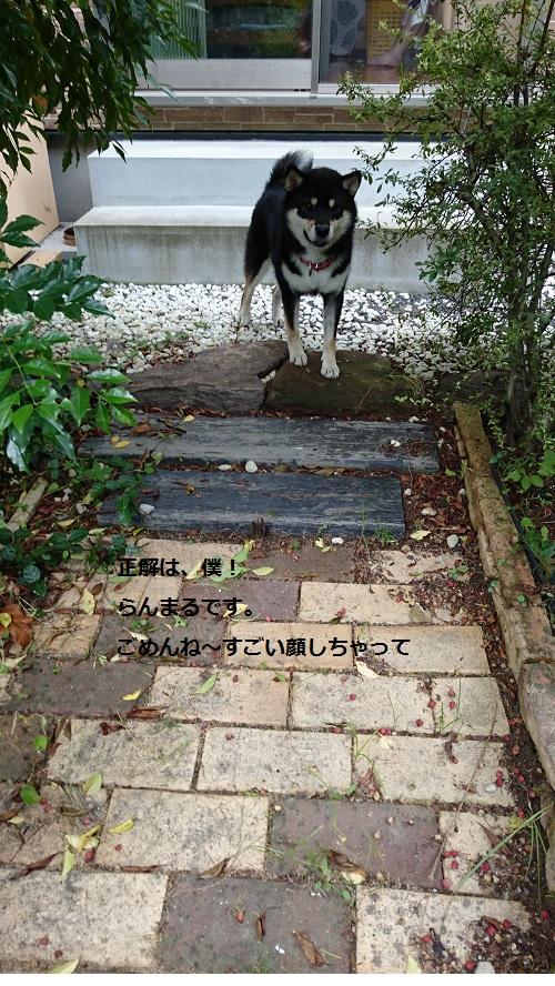 まるちゃん2015092602