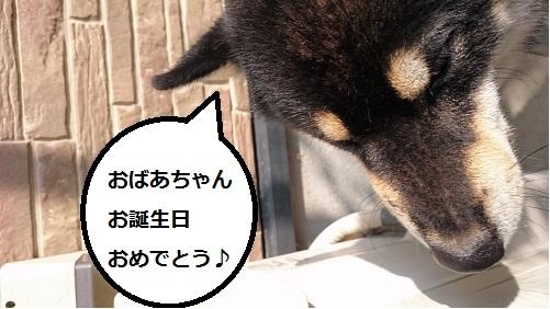まるちゃん2015092805