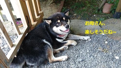 まるちゃん2015092908