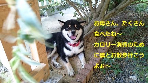 まるちゃん2015093010