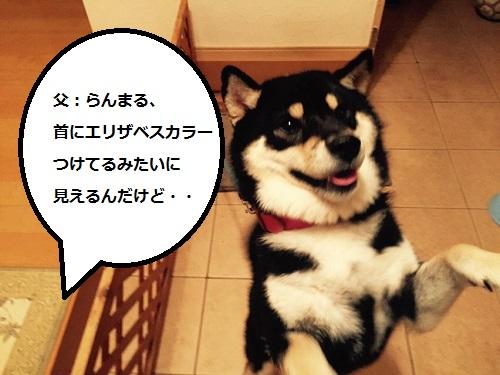 まるちゃん2015102502