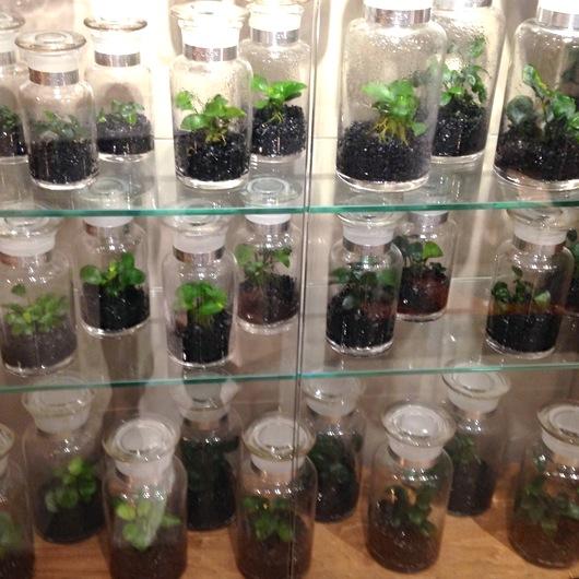 ボトル植物全体