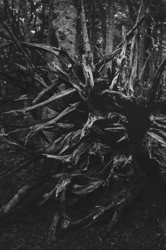 siretoko木