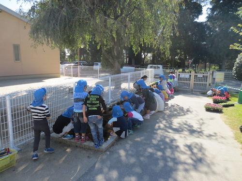 20151014 保育園 パンジー ビオラ 植え込み