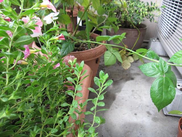 耐え抜いた植物たち