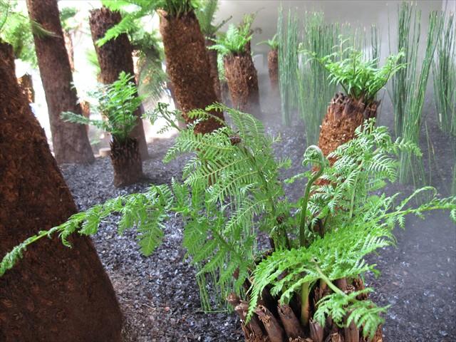 熱帯の植物?