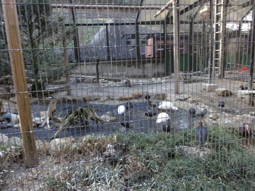 トキ類、ミミズク、タンチョウエリア 多摩動物公園 (8)