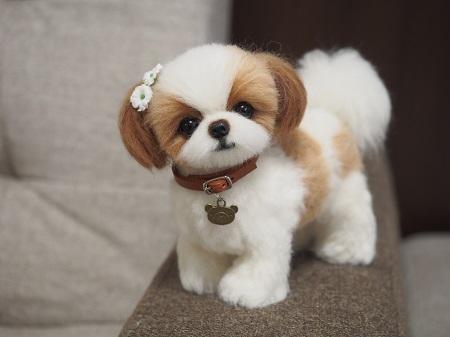 ブログ幼犬シーズー22