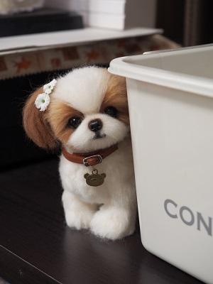 ブログ用犬シーズー2