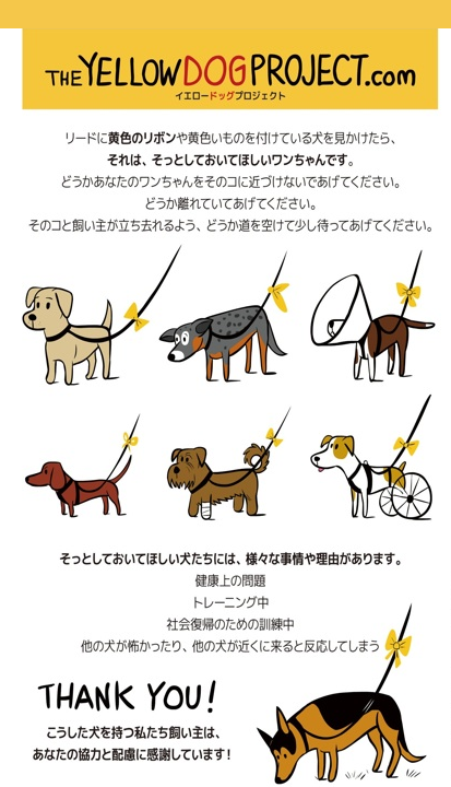 theyellowdogproject-jpn1.png