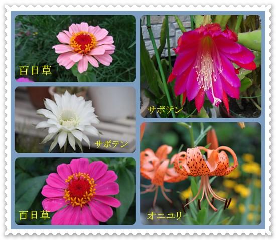 8月の花ー3