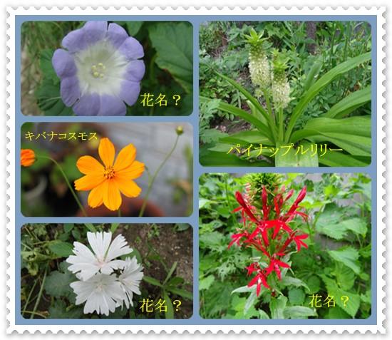 8月の花ー2