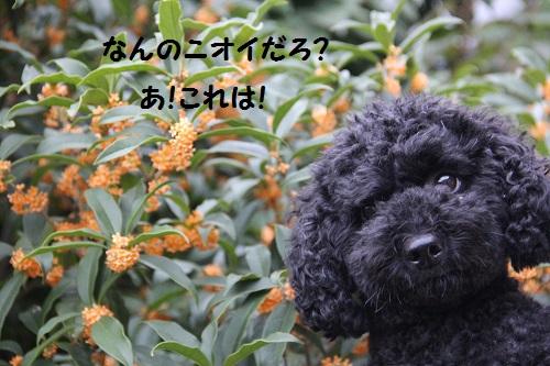IMG_03673.jpg