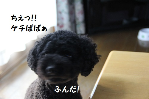 IMG_06923.jpg