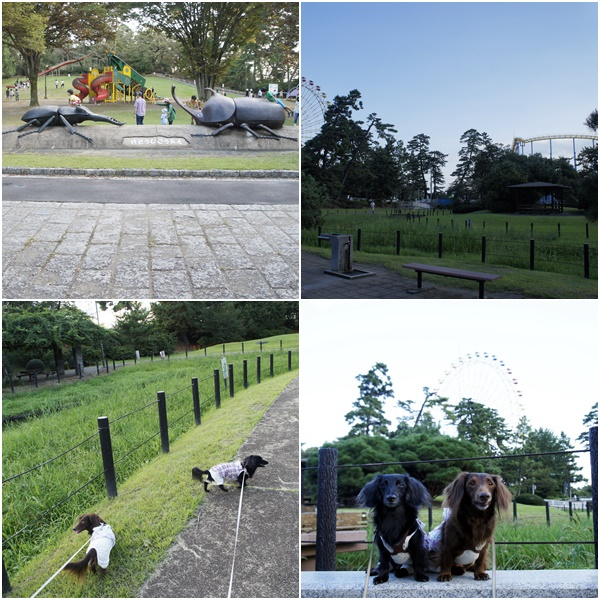 20150920華蔵寺公園1