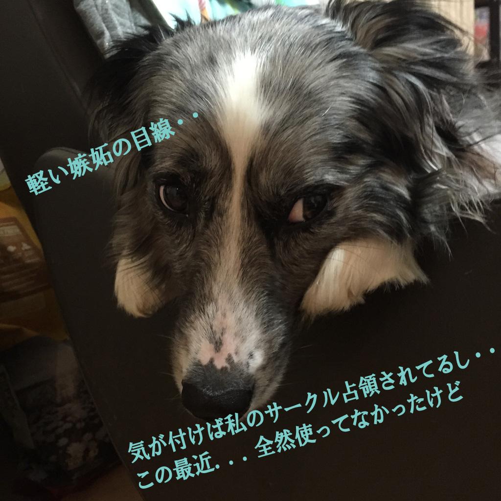 IMG_1573_.jpg