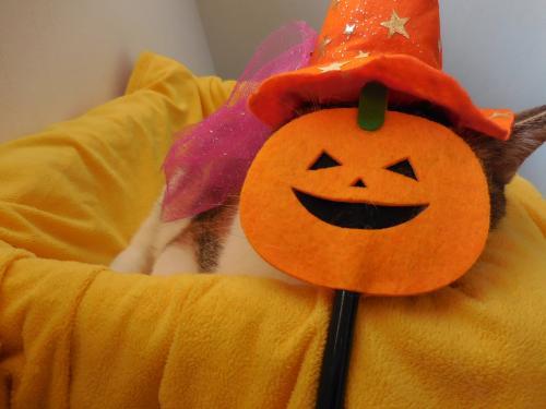 みくかぼちゃ